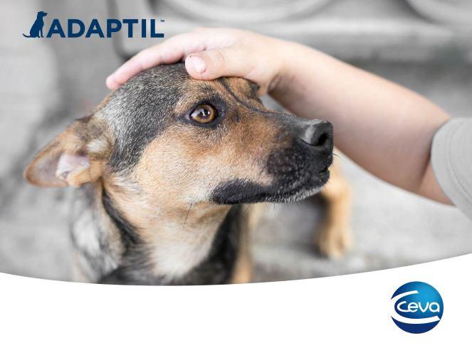 Adaptil-01