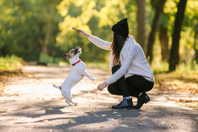 Five+ways+to+bond+with+your+dog-Feb-18-Editorial-02.jpg