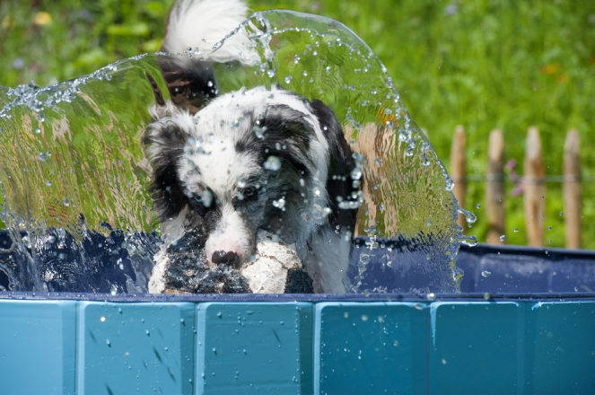 Keep your canine cool during summer - August editorial 02
