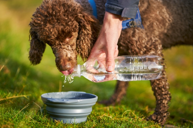 Keep your canine cool during summer - August editorial 04